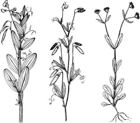Plants Stock Vector - 10441959