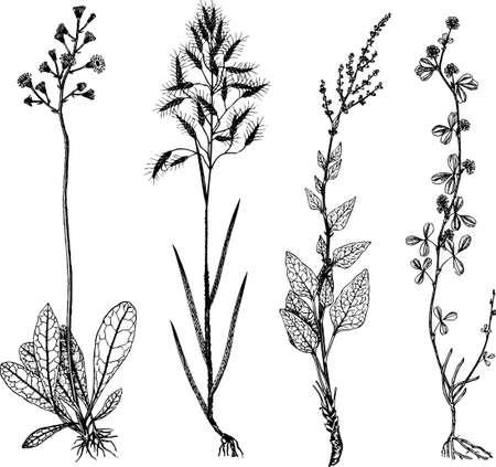Plants Stock Vector - 10441977