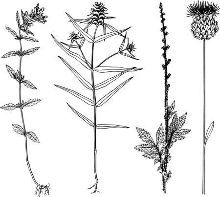 Plants Stock Vector - 10441960
