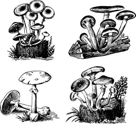 pilz cartoon: Pilze auf wei�