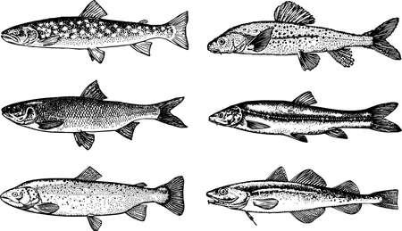 poisson aquarium: Poissons