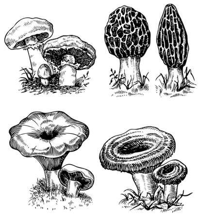 cartoon mushroom: Some mushrooms isolated on white Illustration