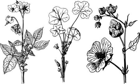 Some flowers isolated on white Stock Vector - 10476383
