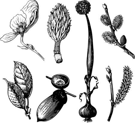 Some plants isolated on white Vector