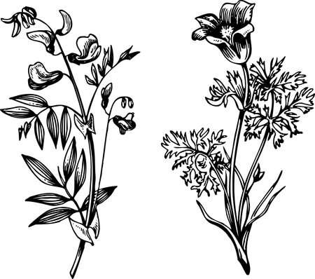herbarium: Some flowers isolated on white Illustration