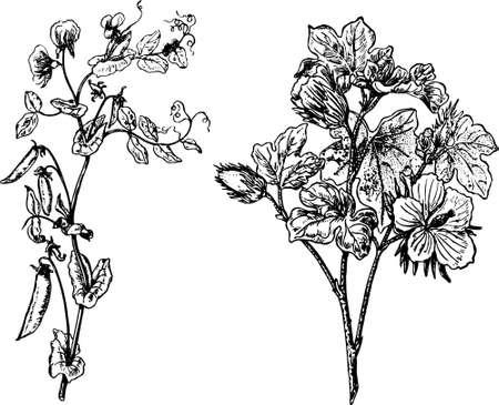 Sommige planten geïsoleerd op wit
