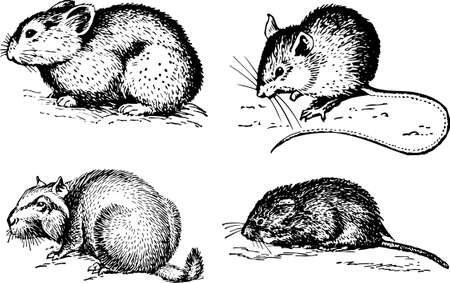 rodents: Rodents