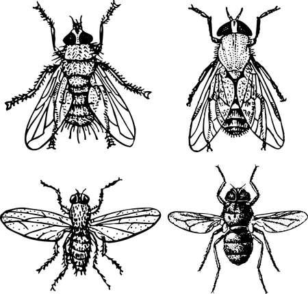 fly up: Flys