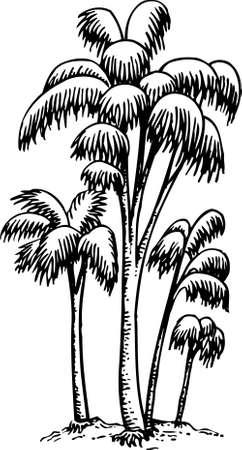 oasis: Palms