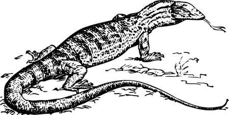 poisonous organism: Sand goana Illustration
