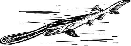 Fish Stock Vector - 10554127