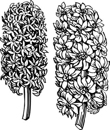 Plant on white Vector