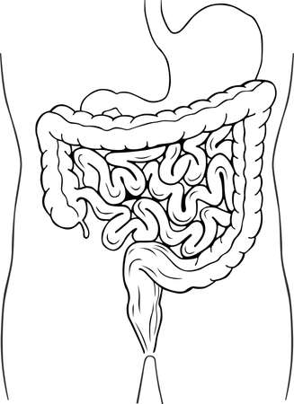 Human internal digestive system Vector