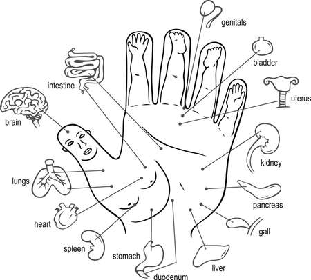 Acupuncture points on palm Vector
