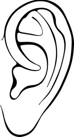 ohr: Menschliche Ohr isoliert auf wei�em Hintergrund