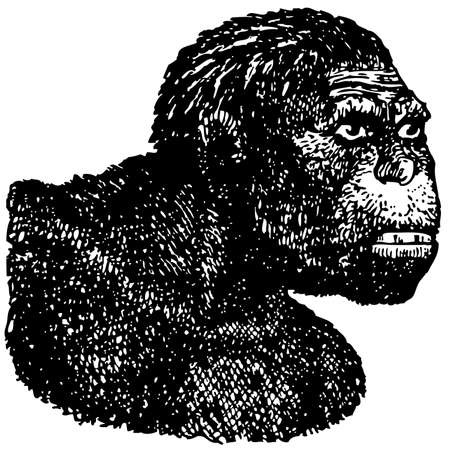human source: Java Man (Homo erectus) Illustration