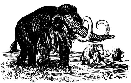 black mammoth: Some mammoths going