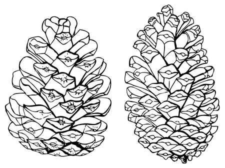 Pinecones Vector