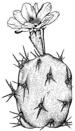 Plant Opuntia dillenii Illustration