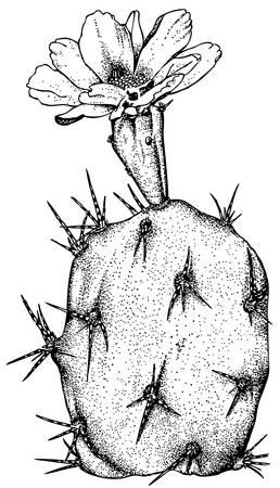 cactus flower: Plant Opuntia dillenii Illustration