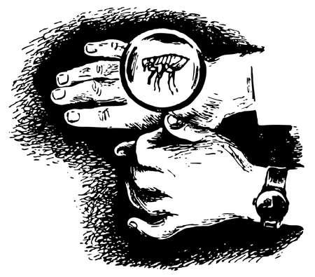 piojos: Los piojos en mano a trav�s de la lupa Vectores