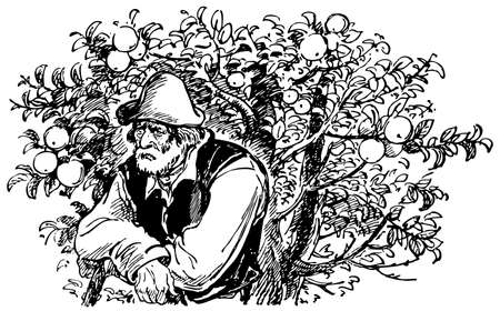apple orchard: Old man at apple tree with many apples