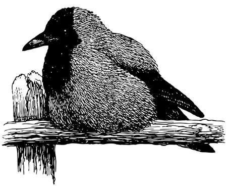 hooded: Bird Hooded Crow