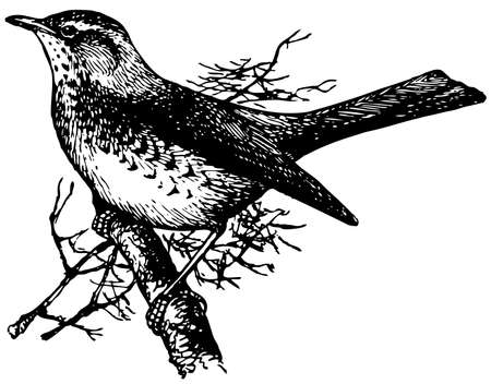 Bird Fieldfare Vector