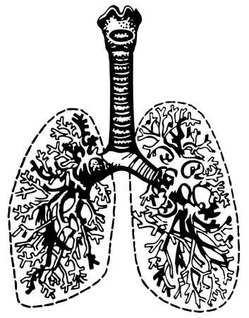 bronchial: Human lungs Illustration