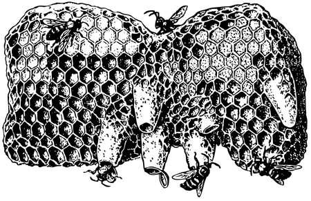 Bijenkorf Vector Illustratie