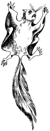 hang up: Philippine Flying Lemur Illustration
