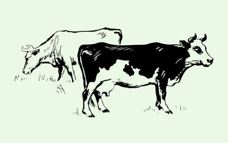 calf: Two cows