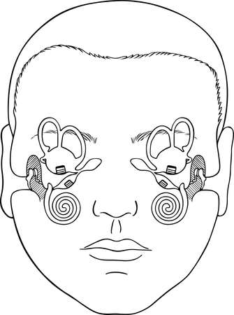 ampulla: Human vestibular apparatus Illustration