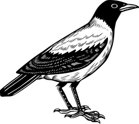 looking away: Crow standing Illustration