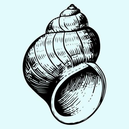 Seashell close-up  Illustration