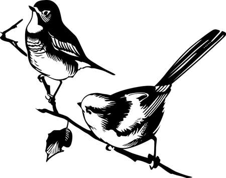 two birds: Two birds on the branch