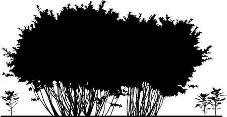 arboles de caricatura: Nice trees dibujos animados