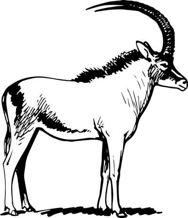 of antelope: Antelope standing on the ground