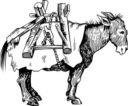 mule: Transportation donkey Illustration