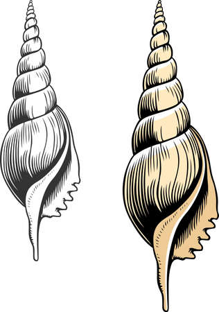 mollusc: Two seashells color and white