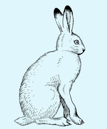 hare: Hare on blue background Illustration