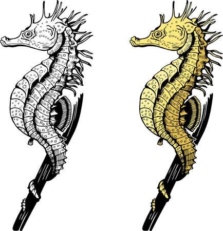 hippocampus: Seahorse