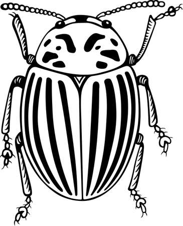 Colorado potato beetle close-up Stock Vector - 16672934