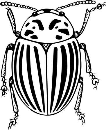 Colorado potato beetle close-up Stock Vector - 16672934