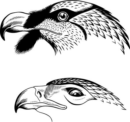 Eagle s heads Vector