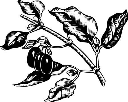 mas: Branch of Cornus mas