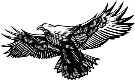 Flying predator Illustration