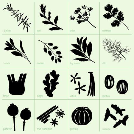 cilantro: Set de especias Vectores