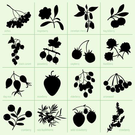 Set von Beeren