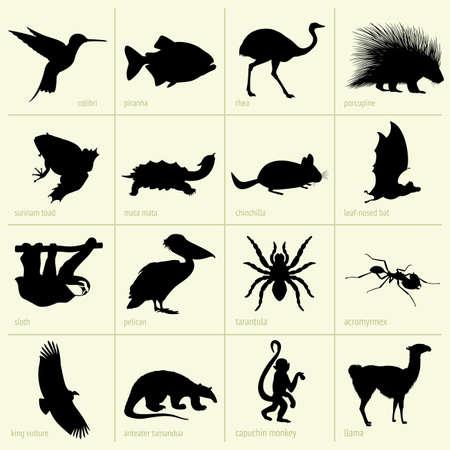 llama:  Animals of South America Illustration